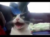 Кот оценил турбо