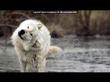 «Основной альбом» под музыку Кристина Прилепина - Не стреляйте. Picrolla