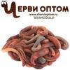 Черви Оптом - оптовая продажа червей по всей РФ
