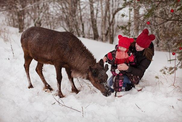 Фото и прогулка с оленем для детей