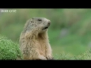 ANIMAL CRACKERS (The Best of BBC One's Walk On The Wild Side) [Shamrock Edit]