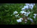 Жека Сказочный лес
