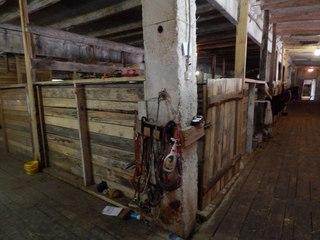 Под Петербургом открыли приют для коров, лошадей и кур