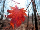 Дидюля - Осенний лист