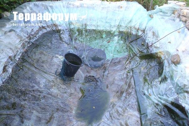 Выращивание клариевого сома в бочках 14