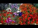 Gustav Klimts Paintings