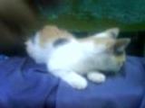 Котята ищут свой дом (есть мальчик, девочка) Ирпень (096) 2648638