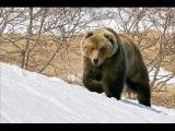 охота на медведя зимой Остросюжетный боевик  bear hunting in winter