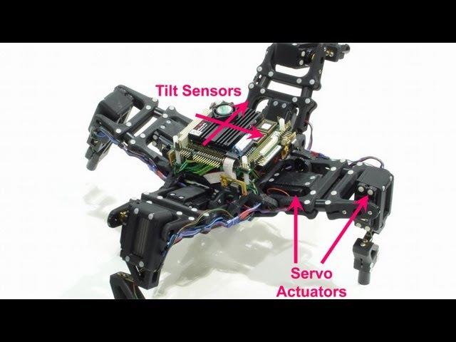 A Robot Teaches Itself How to Walk