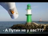 На Путина накакал голубь в прямом эфире   Подарок  от Украины!