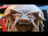 ТОП 5 Самых страшных животных в мире