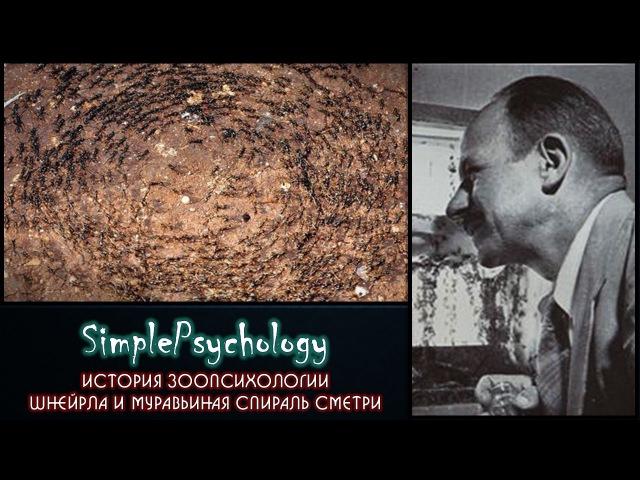История зоопсихологии. Шнейрла и муравьиная спираль смерти.