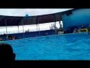 VID_. Дружба между человеком и дельфином. Игры в футбол
