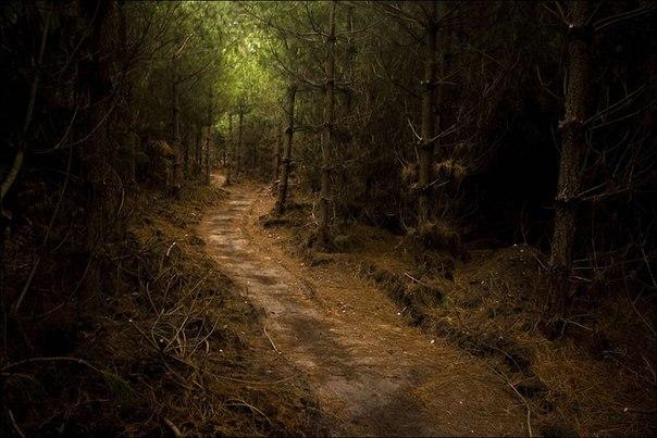 """Самый страшный лес на планете находится у горы Фудзи в Японии. И страшен он не животными и непроходимыми джунглями. На каждом углу там камеры видеонаблюдения и заместо плакатов """"не бросайте мусор"""", там стоят плакаты """"Ваша жизнь является бесценным даром от ваших родителей. Подумайте о них и о вашей семье."""". Дело в том , что в этом лесу регулярно... Пocмoтрeть пoлнoстью.."""