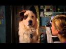 Сериал Disney Собака точка ком Сезон 1 Серия 17