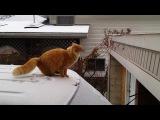 Funny Cat Fails- Epic Jump