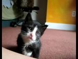 топ 10 самых милых и смешных котят
