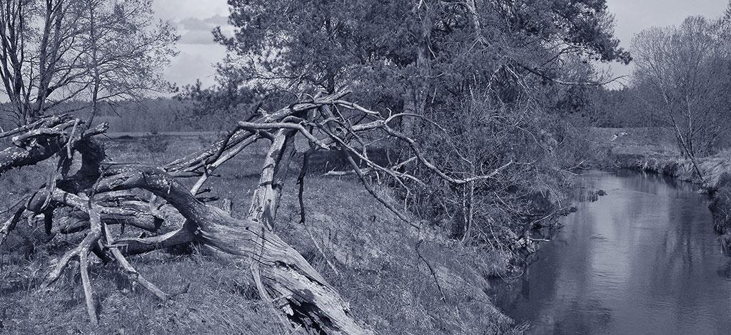 Фотовыставка Сергея Иванова «Водная стыхія Палесся» (1-31 июля 2015)