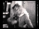 Психоделическое видео Мышь эпилепсик и кот с контрабасом