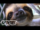 Baby Sloth Sanctuary In Costa Rica The Cute Show