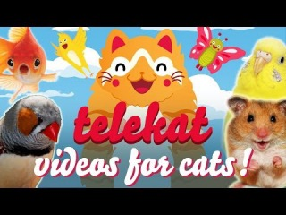 TELEKAT | Super cute animal videos for cats to watch. Entertainment for your cat!