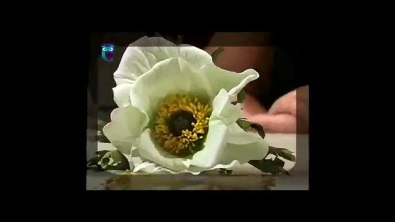 Делаем цветок белого мака из фоамирана (пористая резина). Мастер класс. Наташа Фохтина