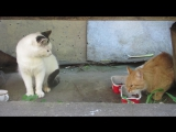 Рыжая кошка, белый кот