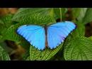 RioNegro Butterflies And Monkeys 4K