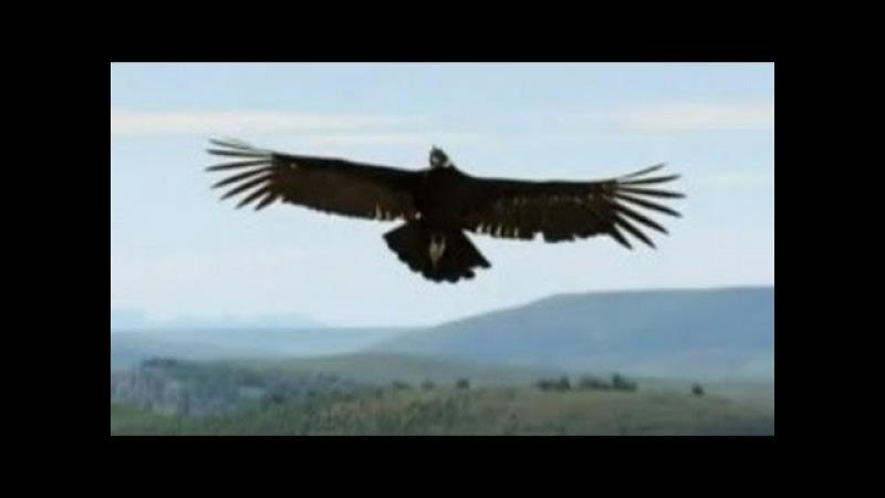 Music by CUSCO Flying Condor