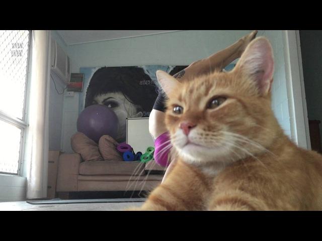 Yogi pet~ (Original Arrogant Cat)