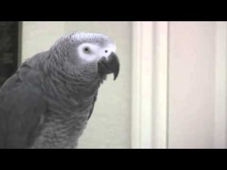Guns N Roses - Patience by Einstein the Talking Texan Parrot