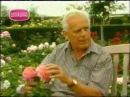 Дэвид Остин рассказывает о своих розах