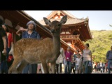 Nara Deer visit the temple - Japan Earth's Enchanted Islands Episode 1 Preview - BBC Two