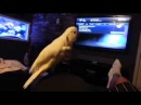 Bird gets down to old school rap
