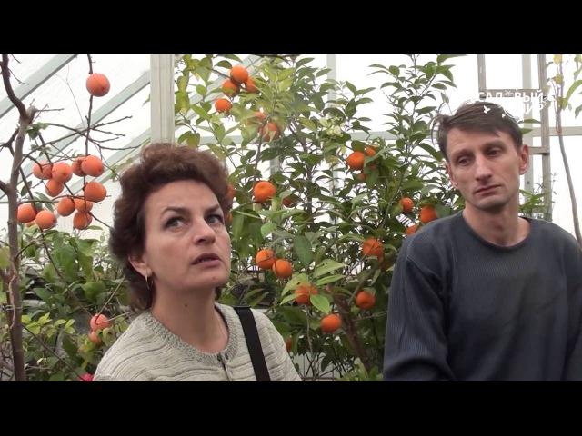 Зимний сад, или оранжерея в доме.Сайт Садовый мир