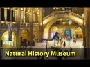 Музей естествознания в Лондоне Natural History Museum