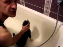 Как правильно мыть кота