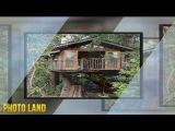 Домик на дереве || PHOTO LAND (домик на дереве смотреть, домик на дереве фото)