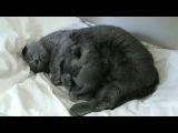 Эпическая битва маленьких котят