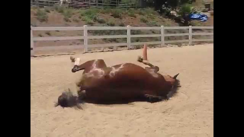 Пукающая лошадь. Такого вы ещё не видели)
