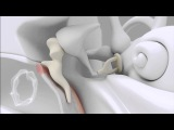 Анатомия уха человека.