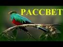 1Час Настоящий Рассвет Соловьи и Другие Птицы Live Nightingales Singing