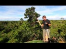 Дом на дереве. Караваи. И фильм о фильме. Индонезия. 20 серия | Мир Наизнанку - 5 сезон