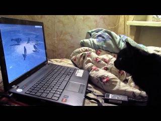 Любители кошачьего кино