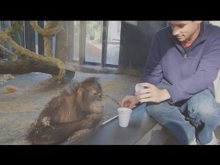 Фокус и обезьяна