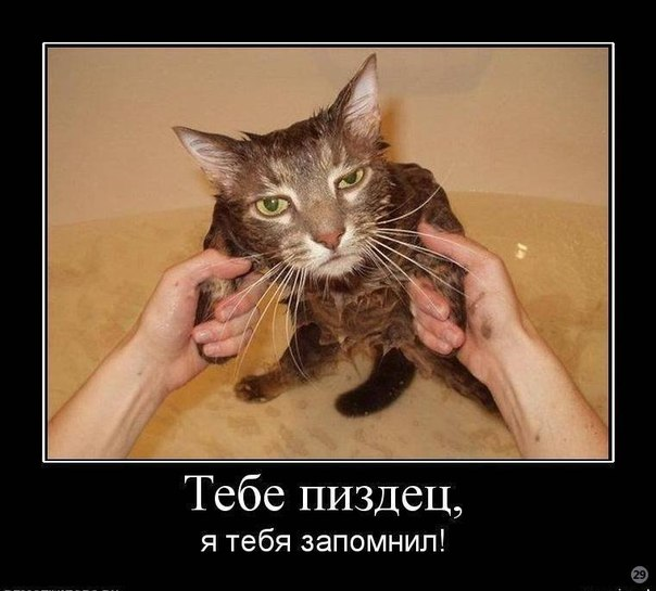 Русские лизби 18 ч мокрыми кисками 2 фотография