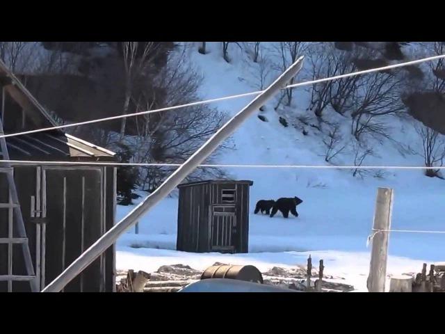 Баба Зина и медведи!