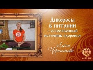 Дикоросы в питании - естественный источник здоровья. Алена Чернышова