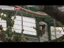 Мэр японского города Сидзуока к 150-летию зоопарка в СПб подарил морозоустойчивых макак
