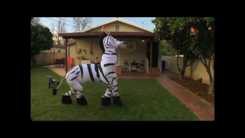 Прикольная танцующая зебра